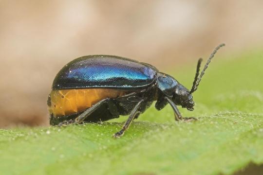 insekt 12 beine panzer