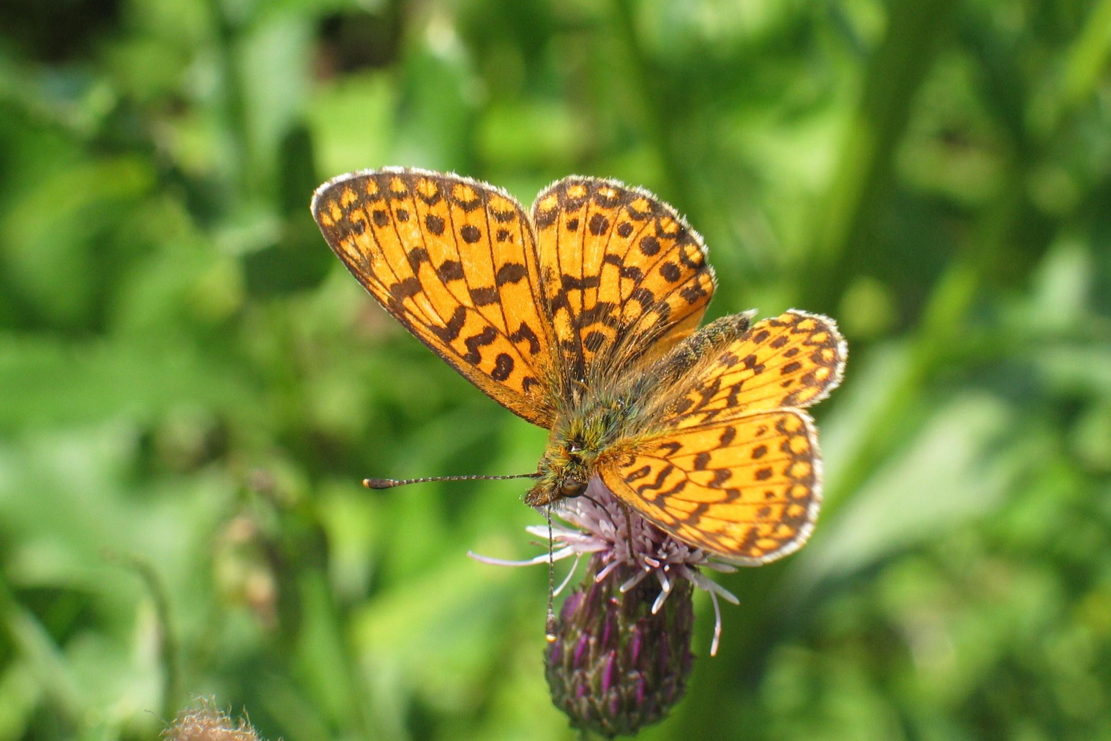 Naturspektrum Schmetterlinge