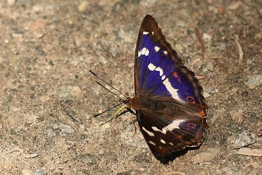 Naturspektrum Artenubersicht Schmetterlinge